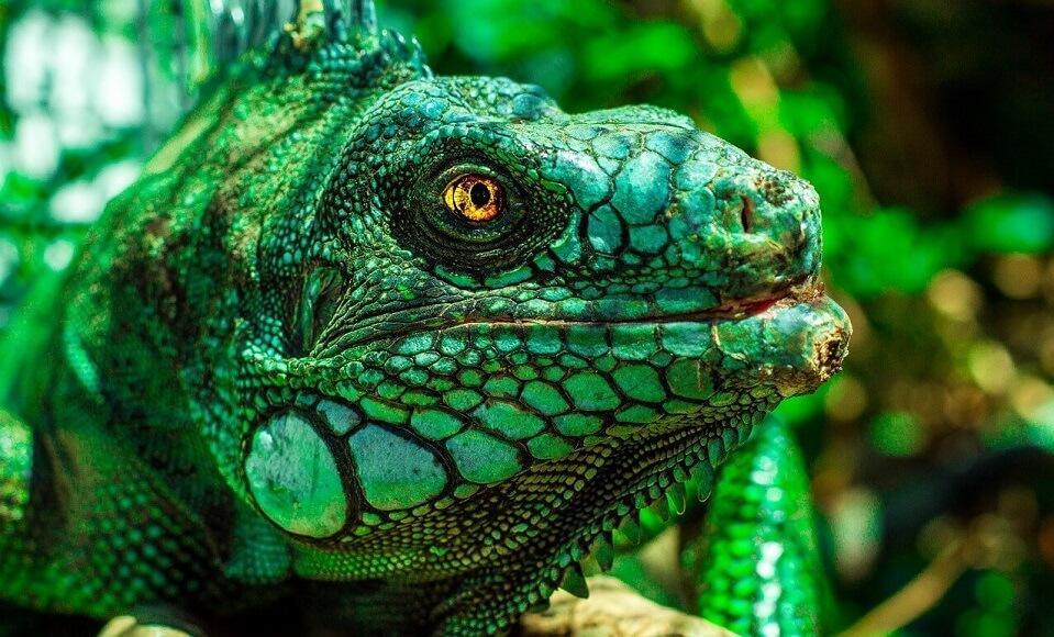 爬虫類と両生類の違いってなに?明確な見分け方を紹介
