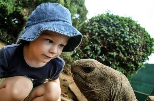 亀の飼育にヒーターが必要な理由【ホカホカで生活】