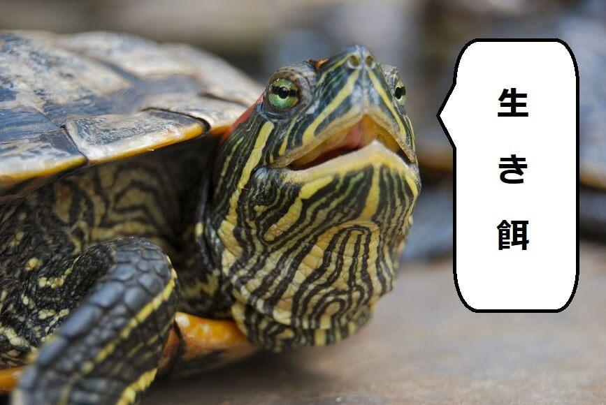 亀の好きな生き餌を大公開!【た...