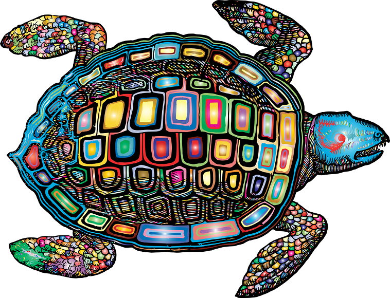 亀の甲羅と体の構造について【意外な事実が明らかに】
