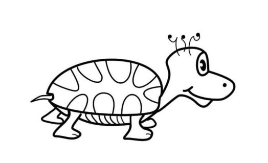 結論=亀の水槽に砂は入れるべきではない