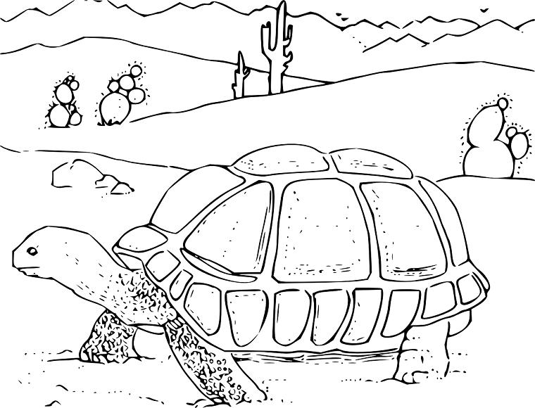 亀の水槽に砂は入れない方がいい件【営業妨害でごめんなさい笑】