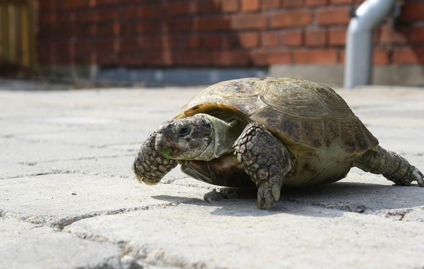 亀の屋外飼育はあまりおすすめしない理由