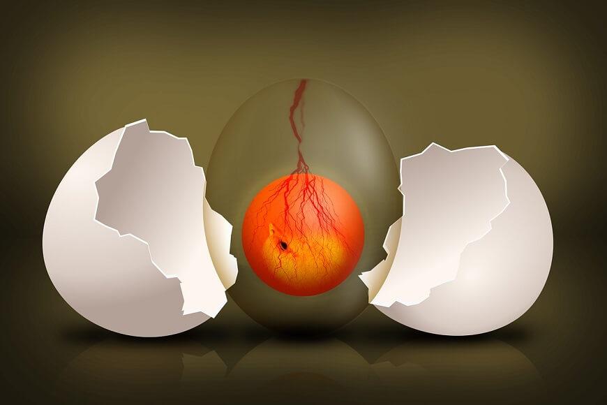 亀が卵を産んだ時の対処法【有精卵と無精卵】