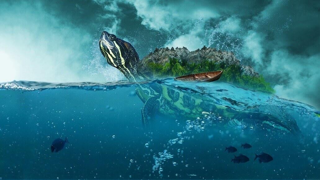 亀が溺れる?最適な水の量とは【飼育歴15年の私が解説】