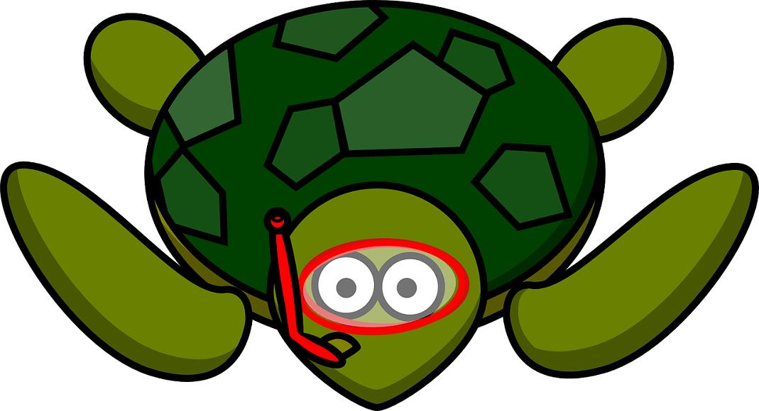 亀の生態を22個の記事で紹介!これであなたも亀博士になれる