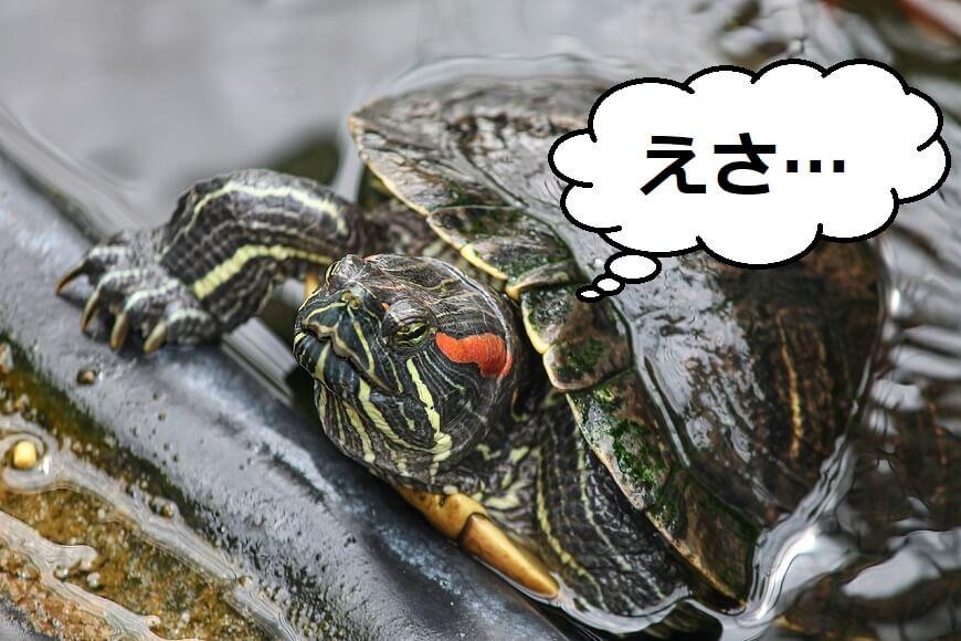 本当におすすめの亀の餌を3つ紹介【バク食い注意】