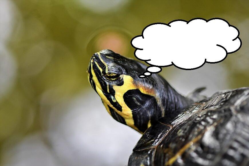 亀の知能ってどれぐらい?頭がいいと思うシーンを3つ紹介