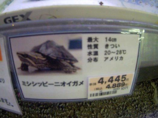 ミシシッピーニオイガメ