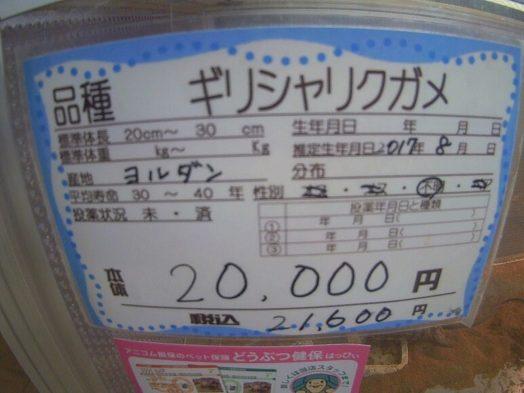 ギリシャリクガメの値段