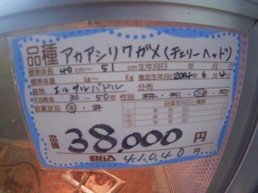 アカアシリクガメの値札