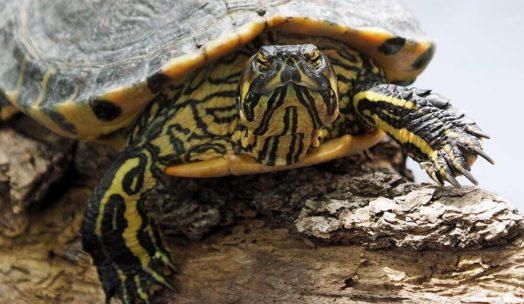 亀の身体の特徴についての記事