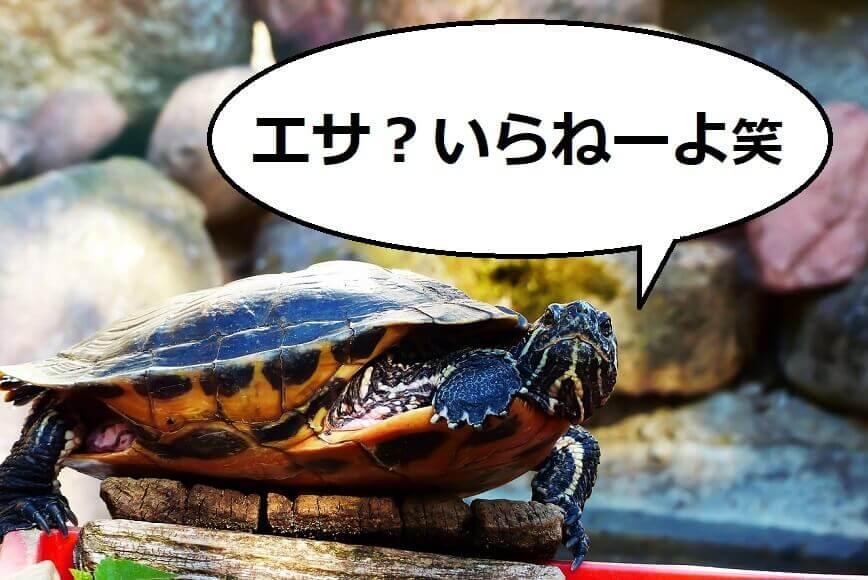 亀が餌を食べない原因+対処法を解説【食欲のない亀のために】
