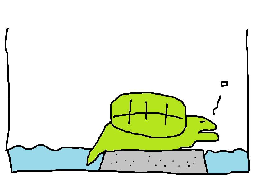 亀が陸で寝ることがあるけど、これって大丈夫なの?【場合によります】