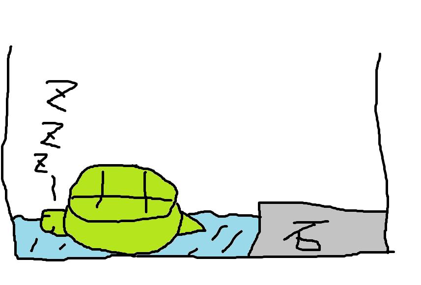 亀の寝る関係の疑問を全て解決する記事【寝る子は育つの巻】