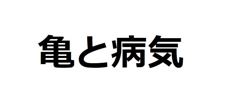 亀がかかる病気9選【原因+対処法を紹介】