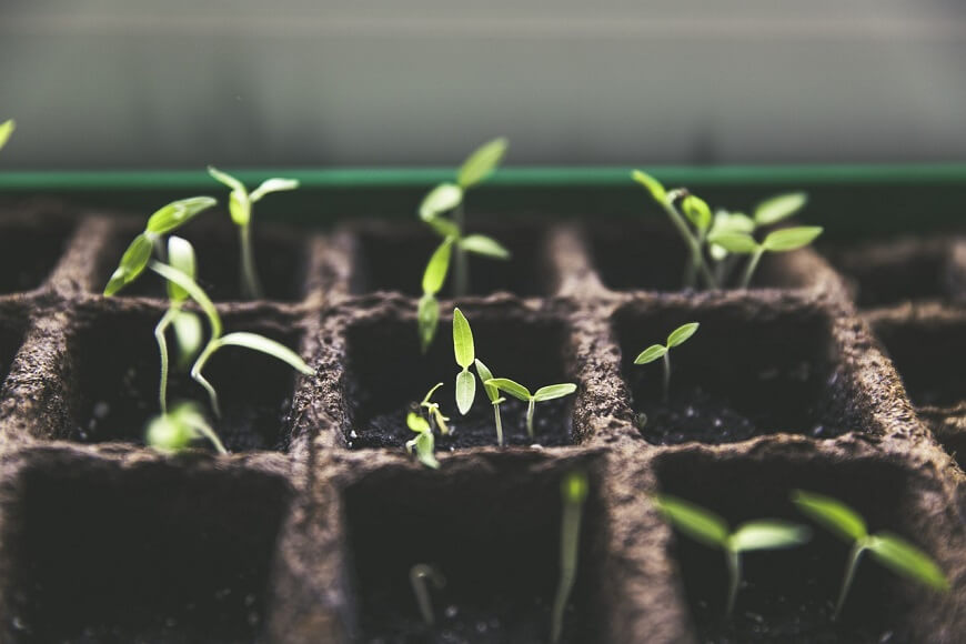 夏の栽培に適した野菜5選【簡単に育つ野菜を厳選】