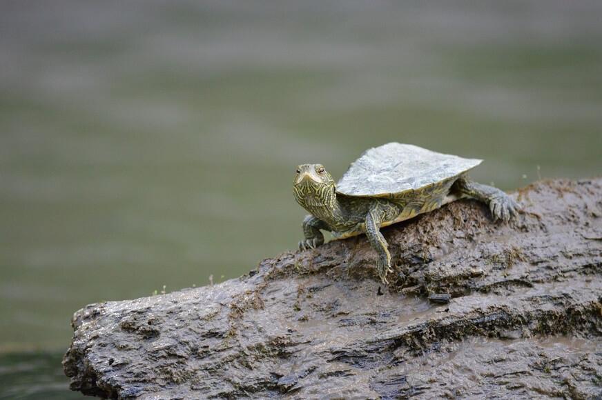 亀に隠れ家はいらないと思う理由【完全オープンで良し!】